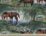 V1219 - Koně ve vodě